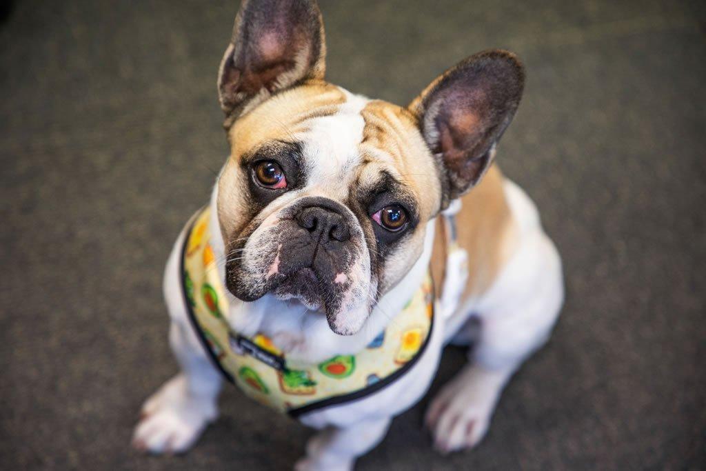 Stitch – Resident Canine